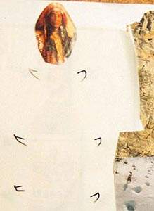 collage de Lydia fragmento 4